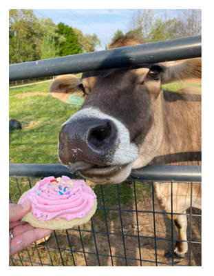 cookie cow